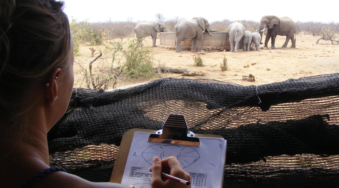 Voluntarios ambientales identificando elefantes en Botsuana.